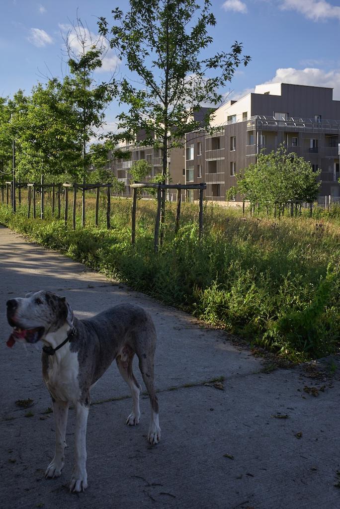 l1009363photos-s-chalmeau-non-libre-de-droits